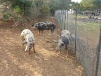 Mini ferme- Parc Accrobranche